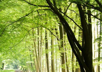 55. Promeneurs dans le bois de la Vecquée | 2018