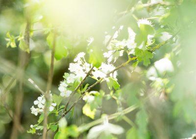 79. Végétation sur les coteaux de Meuse | 2018
